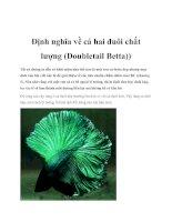 Tài liệu Định nghĩa về cá hai đuôi chất lượng (Doubletail Betta) docx