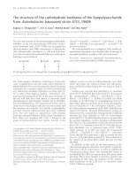 Tài liệu Báo cáo khoa học: The structure of the carbohydrate backbone of the lipopolysaccharide from Acinetobacter baumannii strain ATCC 19606 docx