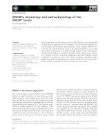 Tài liệu Báo cáo khoa học: SREBPs: physiology and pathophysiology of the SREBP family ppt