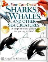 You can draw sharks, whales, and sea creatures