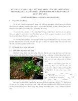 Kỹ thuật và hiệu quả mô hình nông lâm kết hợp trồng mít nghệ
