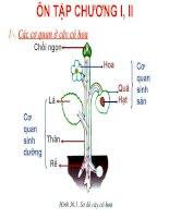 Bài giảng điện tử môn sinh học: Ôn tập cây có hoa potx