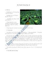 Kỹ thuật trồng bắp cải