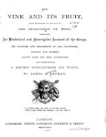 denman - 1864 - the vine and its fruit