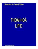 Bài giảng hóa sinh thái hóa lipid