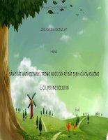 Tiểu luận Công nghệ sinh học thực vật: Sản suất Anthocyanyl trong nuôi cấy rễ bất định củ cải đường L. CV. Peking Koushin