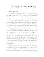Tài liệu Kinh nghiệm nuôi tôm thành công pdf
