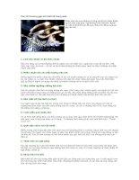 Tài liệu Các lỗi thường gặp khi thiết kế trang web docx
