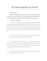 Tài liệu Kỹ thuật trồng dưa lê vân lưới pdf