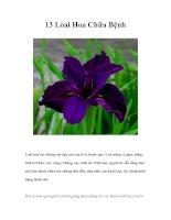 Tài liệu 13 Lòai Hoa Chữa Bệnh doc