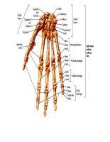 Tài liệu Từ điển chuyên ngành Y - Bàn tay docx