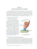 Tài liệu Giáo trình Chăn nuôi trâu bò - Chương 10 docx