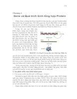 Tài liệu Chương 6: Gene và Quá trình Sinh tổng hợp Protein pdf