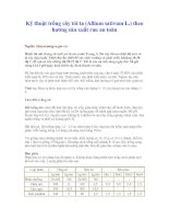 Tài liệu Kỹ thuật trồng cây tỏi ta (Allium sativum L.) theo hướng sản xuất rau an toàn ppt