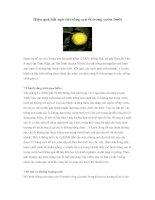 Tài liệu Hiệu quả bất ngờ từ trồng xen ổi trong vườn bưởi docx