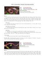 Tài liệu Đặc điểm các loài rắn thuộc họ rắn nước doc