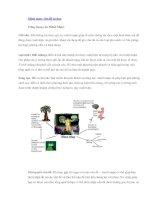 Tài liệu Mind map - Sơ đồ tư duy ppt