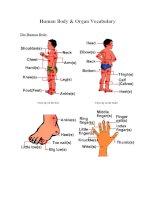 Tài liệu Human Body & Organ Vocabulary doc