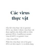 Tài liệu Các virus thực vật pptx