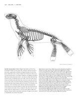 Tài liệu Figure Drawing - Sea lion, Gorilla, Human pdf