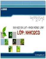 Tài liệu Bài thuyết trình đề tài: Sản xuất rau mầm sạch doc