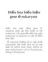 Tài liệu Điều hòa biểu hiện gene ở eukaryote doc