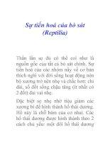 Tài liệu Sự tiến hoá của bò sát (Reptilia) pdf