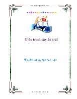 Tài liệu Giáo trình cây ăn trái - chương 2 pdf