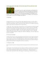 Tài liệu Triển vọng và lộ trình phát triển cây Jatropha để sản xuất diesel sinh học ở Việt Nam pdf