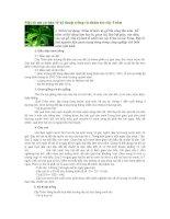Tài liệu Một số nét cơ bản về kỹ thuật trồng và chăm sóc cây Trôm doc