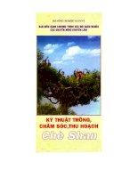 Tài liệu Kỹ thuật trồng, chăm sóc, thu hoạch chè Shan ppt