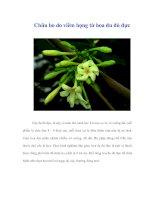 Tài liệu Chữa ho do viêm họng từ hoa đu đủ đực ppt