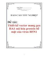 """Tài liệu Luận văn cao học """"Thiết kế vector mang gen HA1 mã hóa protein bề mặt của virus H5N1"""
