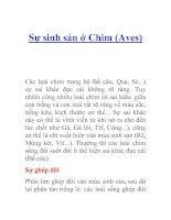 Tài liệu Sự sinh sản ở Chim (Aves) ppt