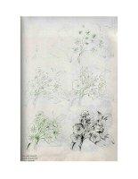Tài liệu Draw 50 Flowers, Trees, Plants P2 pdf