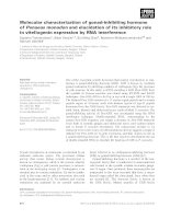 Báo cáo khoa học: Molecular characterization of gonad-inhibiting hormone of Penaeus monodon and elucidation of its inhibitory role in vitellogenin expression by RNA interference pptx