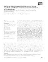 Báo cáo khoa học: Bacterial b-peptidyl aminopeptidases with unique substrate specificities for b-oligopeptides and mixed b,a-oligopeptides pptx