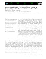 Báo cáo khoa học: A characteristic Glu17 residue of pig carnitine palmitoyltransferase 1 is responsible for the low Km for carnitine and the low sensitivity to malonyl-CoA inhibition of the enzyme docx