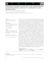 Báo cáo khoa học: Proteolytic activation and function of the cytokine Spatzle in the innate immune response of a lepidopteran insect, Manduca sexta ppt