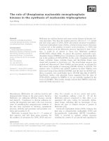 Báo cáo khoa học: The role of Ureaplasma nucleoside monophosphate kinases in the synthesis of nucleoside triphosphates potx