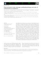 Báo cáo khoa học: Post-ischemic brain damage: pathophysiology and role of inflammatory mediators ppt