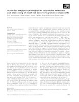 Báo cáo khoa học: A role for serglycin proteoglycan in granular retention and processing of mast cell secretory granule components ppt