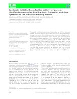 Báo cáo khoa học: Bacitracin inhibits the reductive activity of protein disulfide isomerase by disulfide bond formation with free cysteines in the substrate-binding domain pptx