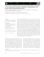 Báo cáo khoa học: The role of evolutionarily conserved hydrophobic contacts in the quaternary structure stability of Escherichia coli serine hydroxymethyltransferase pptx