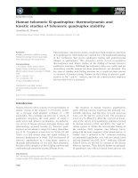 Báo cáo khoa học: Human telomeric G-quadruplex: thermodynamic and kinetic studies of telomeric quadruplex stability potx