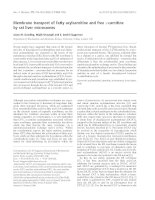 Báo cáo khóa học: Membrane transport of fatty acylcarnitine and free L-carnitine by rat liver microsomes pot