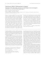 Báo cáo khoa học: Cytochrome P460 of Nitrosomonas europaea Formation of the heme-lysine cross-link in a heterologous host and mutagenic conversion to a non-cross-linked cytochrome c ¢ pot