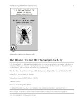 The House Fly and How to Suppress It pptx