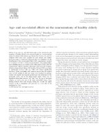 Age- and sex-related effects on the neuroanatomy of healthy elderly pdf