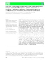Báo cáo khoa học: Enzymes of mannitol metabolism in the human pathogenic fungusAspergillus fumigatus– kinetic properties of mannitol-1-phosphate 5-dehydrogenase and mannitol 2-dehydrogenase, and their physiological implications pot
